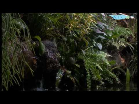 Aquarium et mur v g youtube for Mur vegetal aquarium