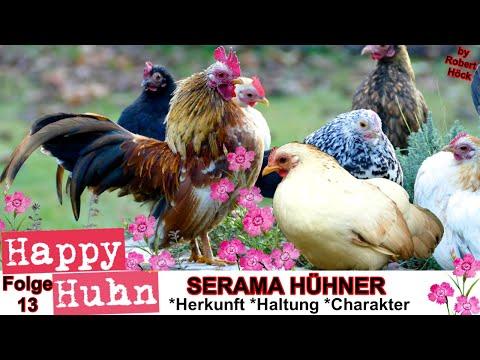 happy huhn folge 13 serama h hner im rasseportrait. Black Bedroom Furniture Sets. Home Design Ideas