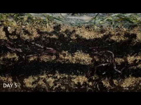 Worms At Work - 20 Days Time Lapse Of Vermicomposting