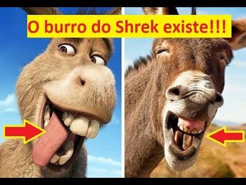 Desenhos animados na vida real (o Burro e o gato de botas do Shrek são idênticos!) from YouTube · Duration:  5 minutes 16 seconds