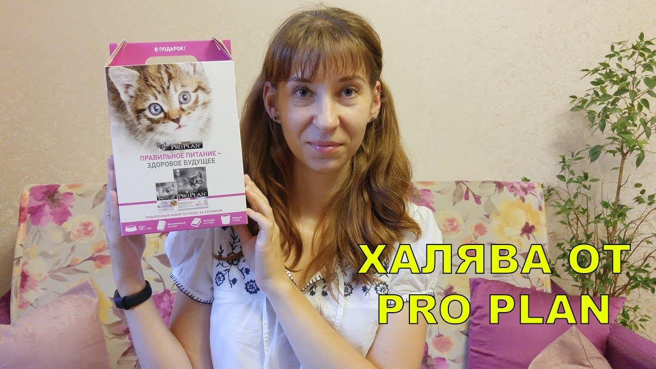 корм для кошек купить оптом - YouTube