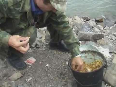 рыбалка красноярское водохранилище сазан