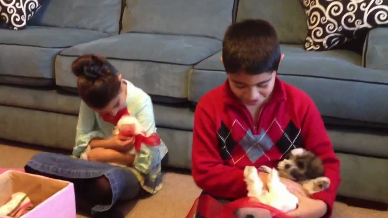 Puppies for Christmas - YouTube