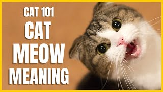 Cats 101 : Cat Meow Meaning