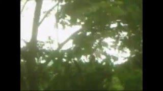 LO MAS LINDO DE LAS 80 SALINAS PUERTO RICO