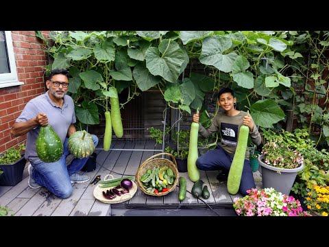Harvesting Deshi Vegetables In Uk 2021