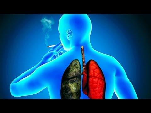 Los Pulmones y el Cordyceps WWW.SALUDNATURAL.TK