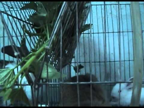 Lồng nuôi thỏ công nghiệp chồng 3 tầng