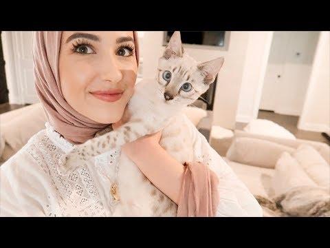 We Got a Bengal Kitten!