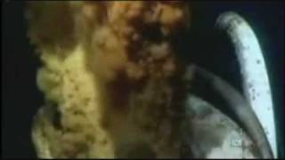 BP oil spill (environmental impact), From YouTubeVideos