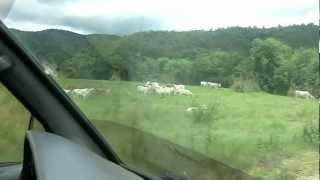 コレはブスアンガ空港へ向かう道で殆ど車も通らないですね、 そこの牧場...
