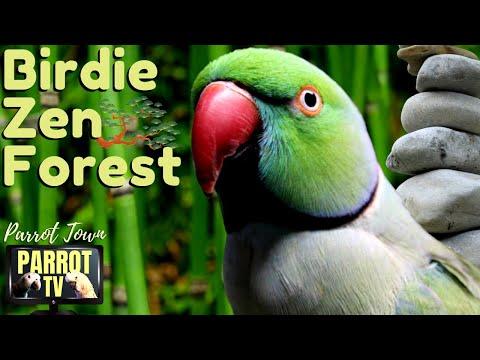 Zen Bird Forest | Relaxing Music For Parrots | HD Parrot TV For Birds To Watch | 24/7 Bird Companion