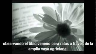 Flightless bird - Iron & Wine Sub ES