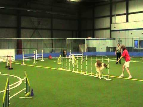 Doro the Agility Borzo...