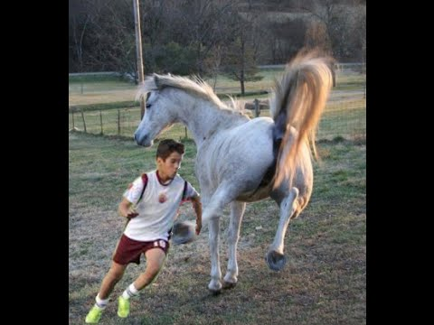 Patadas de caballo, Mortal