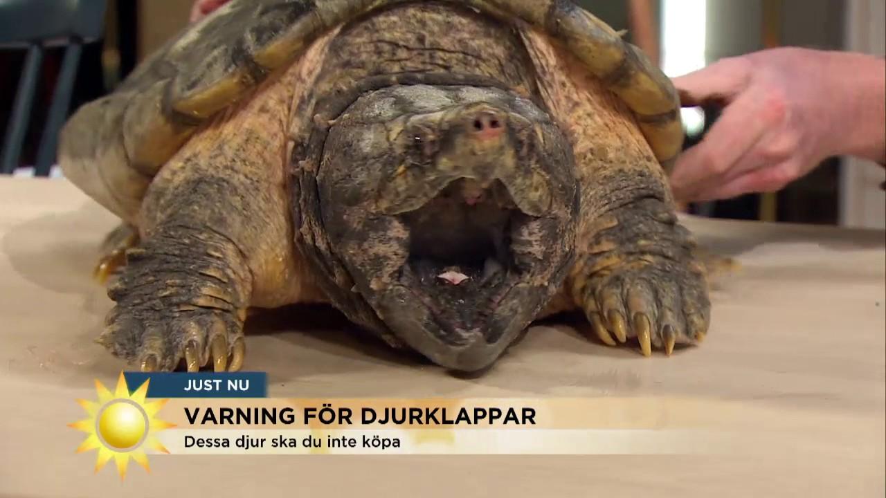 Varning for farlig show i kanal 5