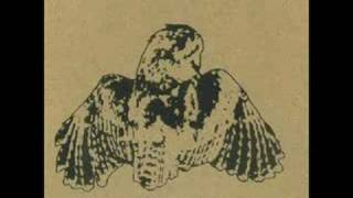 Wow, Owls! - Let