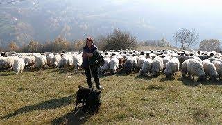 Od ovčarstva se može dobro živjeti