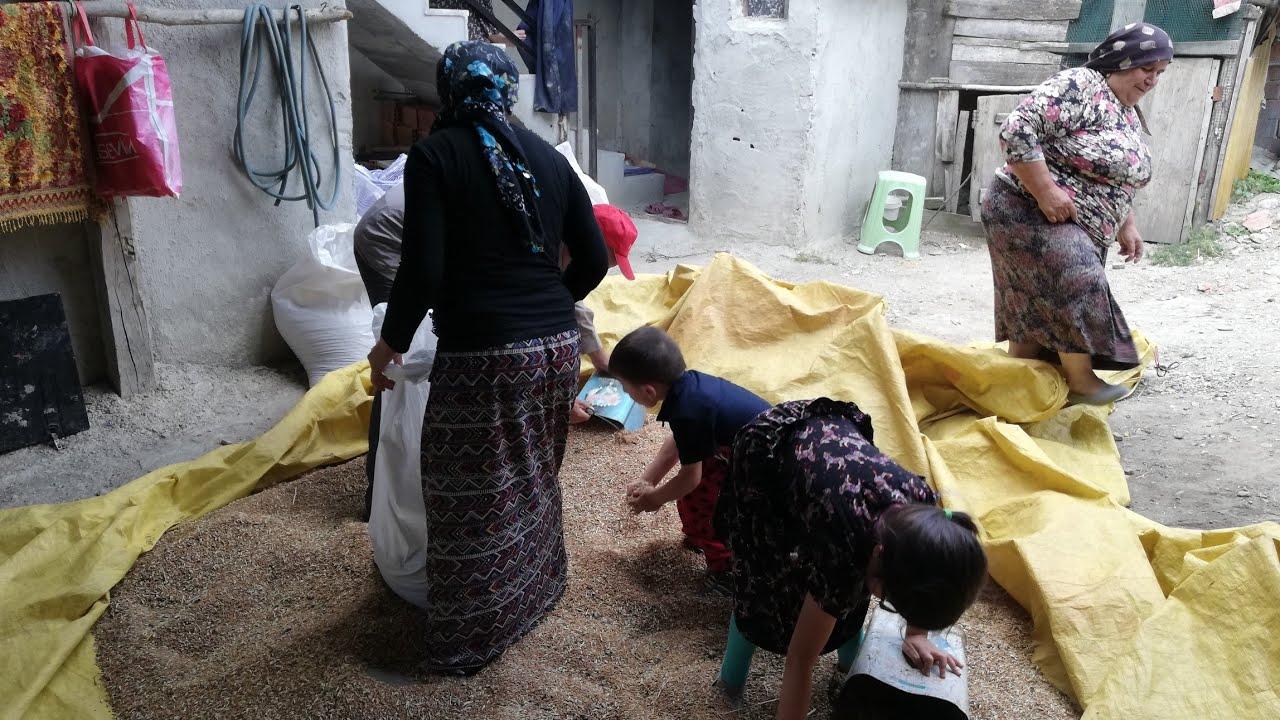 Günlük vlog köy işleri elamanlar sıkı çalışıyor maşallah