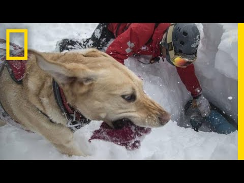 Capturing the Impact of Avalanche Rescue Dogs | National Geographic