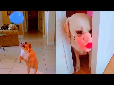Awesome Bored Dog in The House   Dogs and Cats Videos Compilation