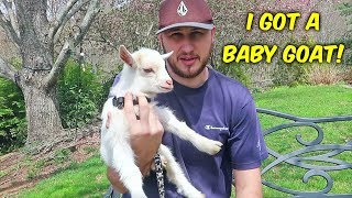 Meet Our Goat! (not clickbait)