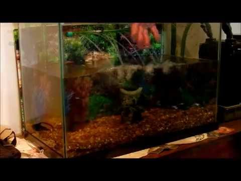 How to clean the gravel in a tropical fish tank youtube for How to clean fish tank rocks