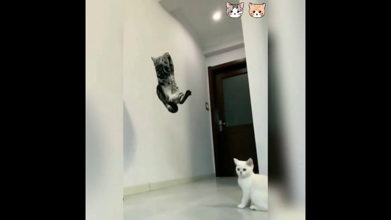 CUTE CATS / FUNNY CAT VIDEOS / PETS COMPILATIONS