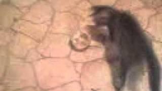 Коту не нравится вода.mp4