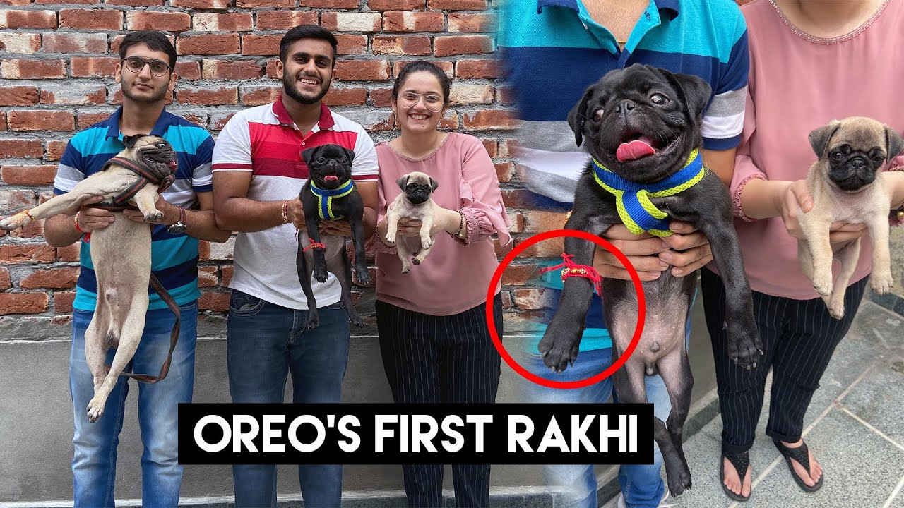 Celebtrating rakhi with my dogs