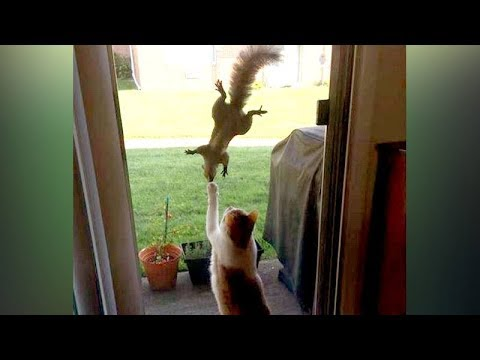 You'll be SURPRISED that SQUIRRELS CAN BE FUNNIER THAN CATS - Funny ANIMAL compilation