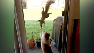 You'll be SURPRISED that SQUIRRELS CAN BE FUNNIER THAN CATS - Funny ANIMAL compilation thumbnail