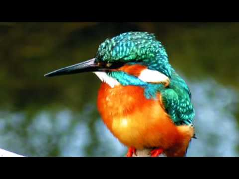 As Kingfishers Catch Fire, Dragonflies Draw Flame...
