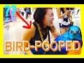 Bird Poops On Tourist Girl In Mongkok, Hongkong