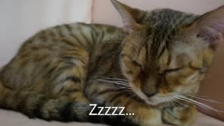 ギター好き、ボサノバ好き、猫好き、ホッケー好き、昭和人間にお送りす...