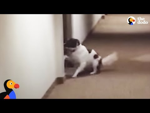Dog Knocks On Best Friend's Door To See If She's Home | The Dodo