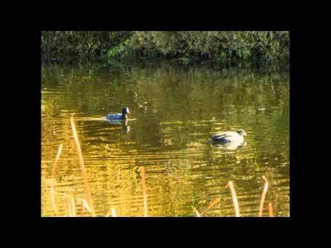 Klamath Basin National Wildlife Refuges