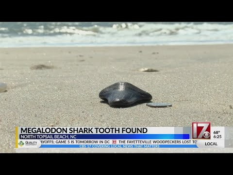 Raleigh girl finds megalodon tooth on beach in North Topsail