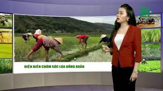 VTC14 | Thời tiết nông vụ 27/02/2018 | vụ Đông Xuân ở vùng Tây Bắc đang bị ảnh hưởng