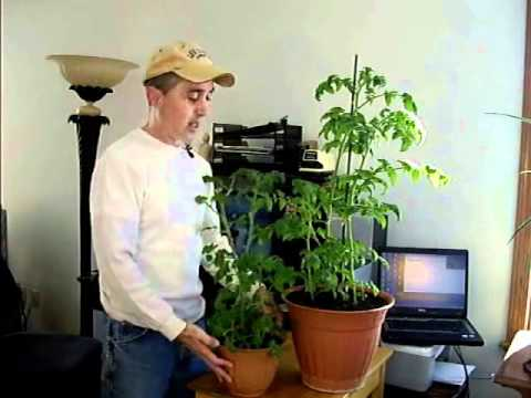 Indoor organic vegetable growing tips youtube - Growing vegetables indoors practical tips ...