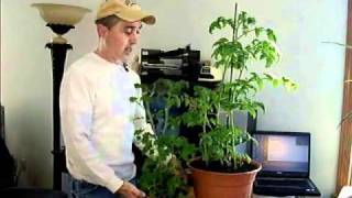 Indoor Organic Vegetable Growing Tips!