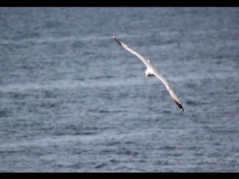 Türkiye'deki Nesli Tehlikede Olan Kuşlar