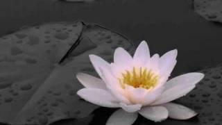 Novel 23 - Siberian Lily