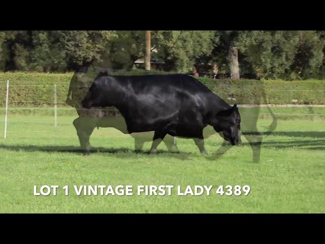Vintage Angus Lot 1