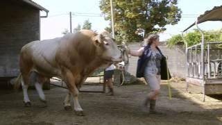 Histoire Métiers - Véronique, éleveuse de bovins