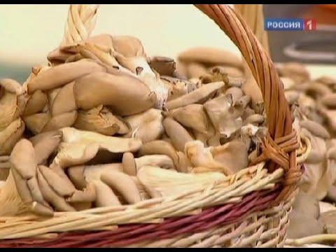 куплю грибы вешенка в беларуси