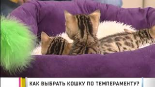Как выбрать кошку по темпераменту?