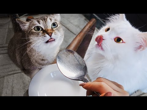 How Cats React To Me Eating Invisible Food