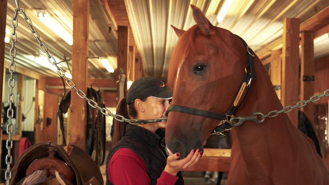 TENNESSEE WALKING HORSE COMMUNITY