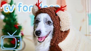 Xmas TV for Dogs! Step Into Christmas Classing Relaxing Dog Music & TV thumbnail
